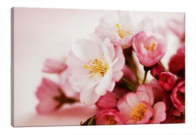 5D картина  «Японская вишня»