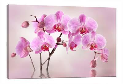 5D картина  «Розовая орхидея»