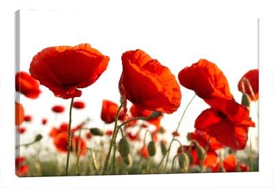 5D картина «Красные маки»