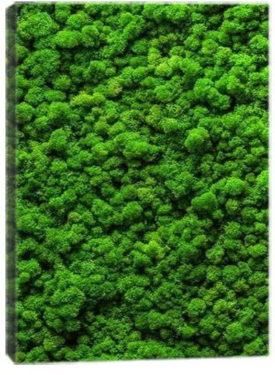 5D картина «Тропическая пышность. Арт 2»