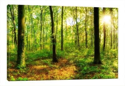 5D картина «Летний лес»