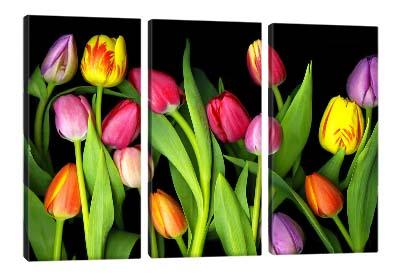 5D картина «Тюльпаны»
