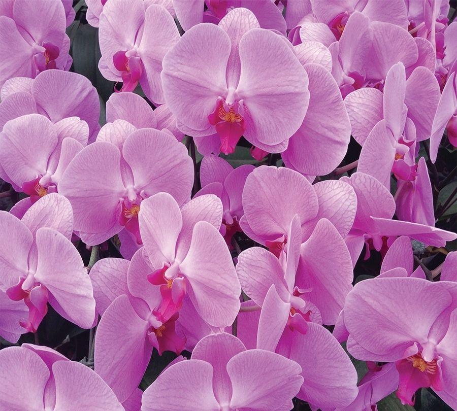 Фотошторы «Ковер из орхидей» вид 1