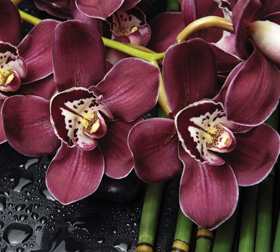 3D Фотообои Фотошторы «Орхидеи и капли воды»