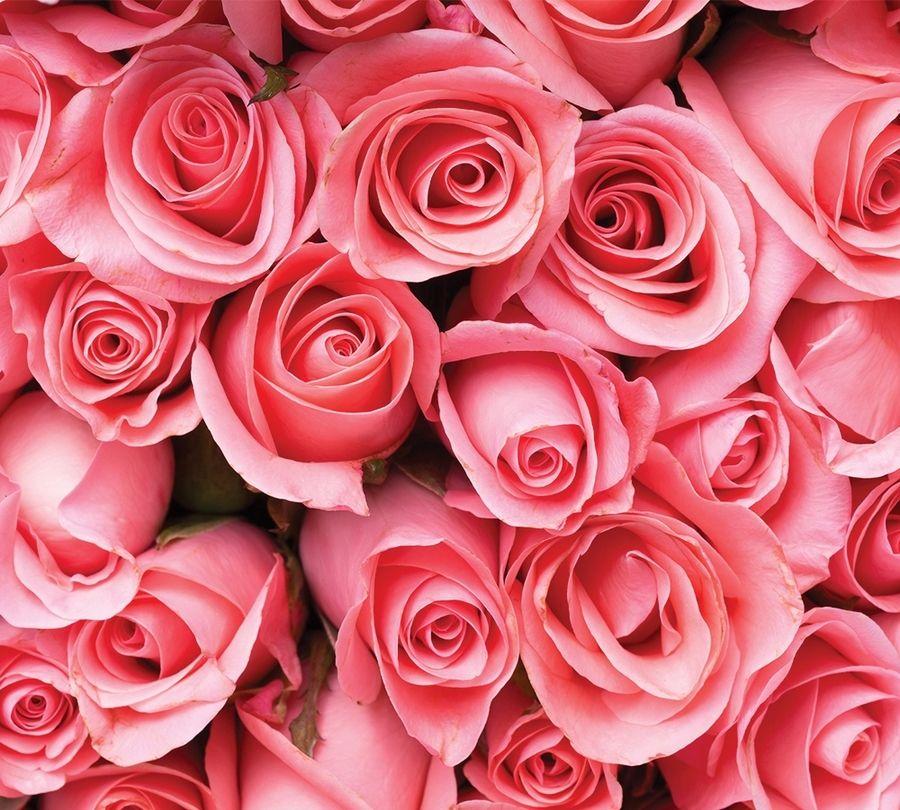 3D Фотообои Фотошторы «Обилие роз»