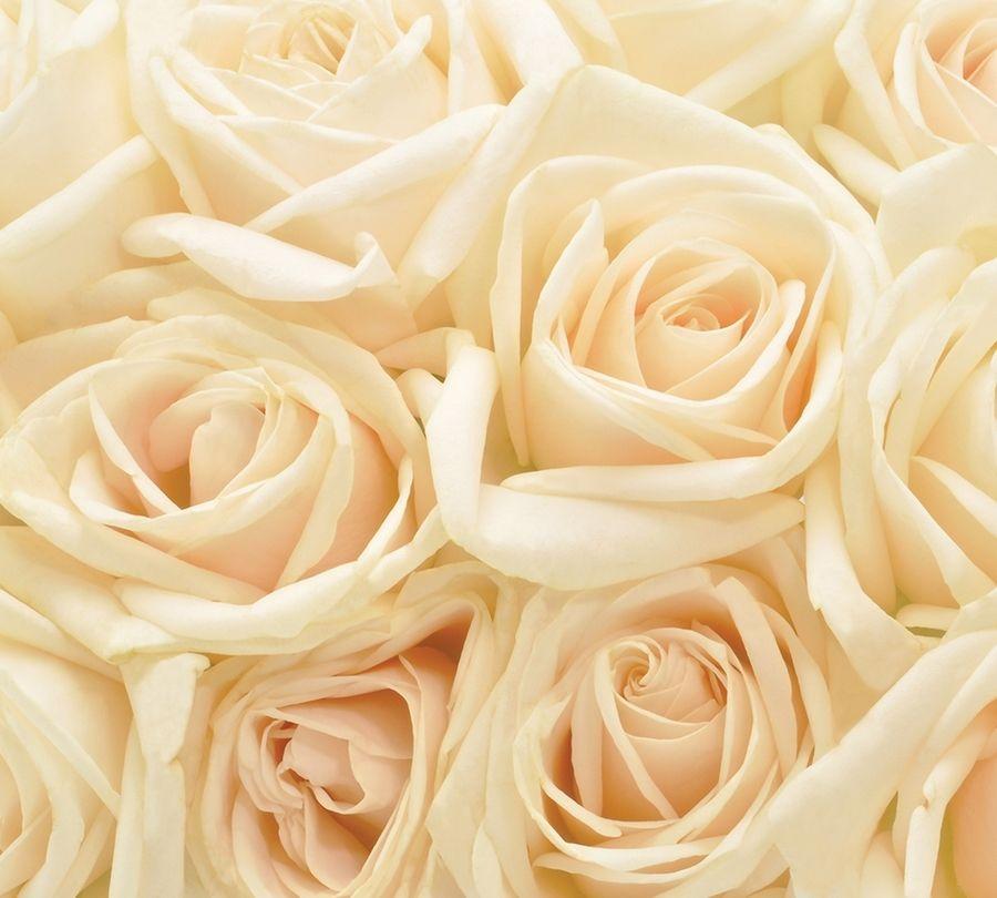 Фотошторы «Ковер из бежевых роз» вид 1
