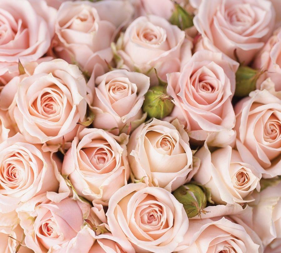 3D Фотообои Фотошторы «Кремовые розы»