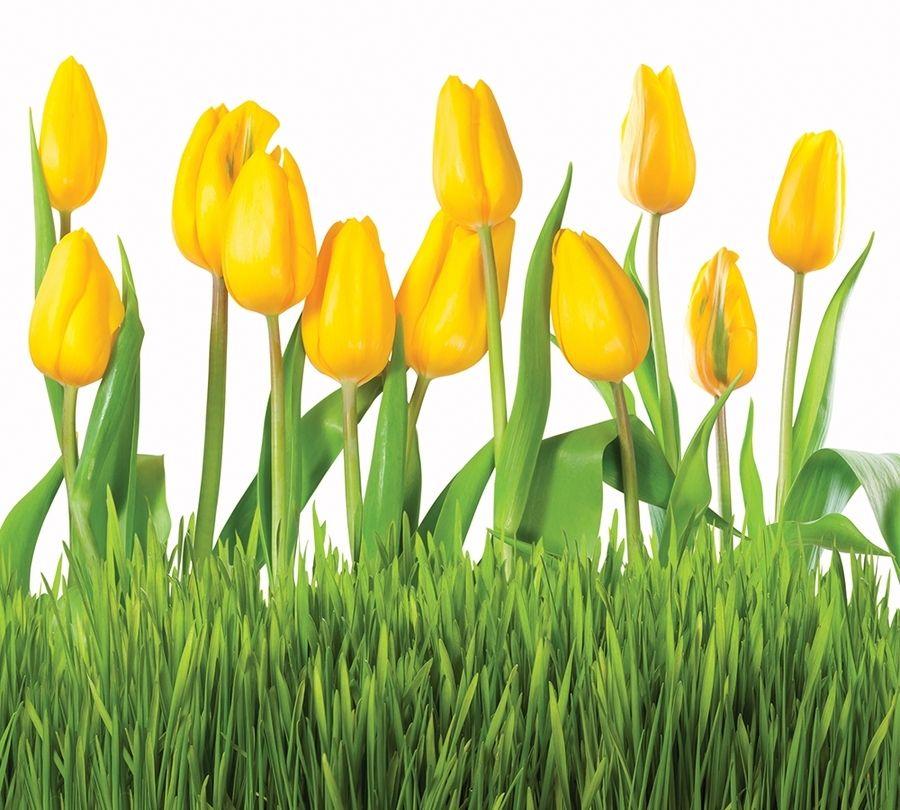 Фотошторы «Желтые тюльпаны» вид 1
