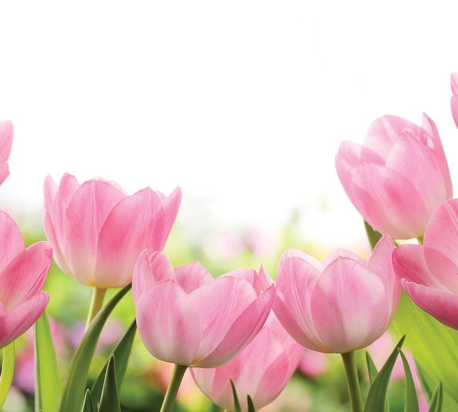 Фотошторы «Нежные розовые тюльпаны» вид 1