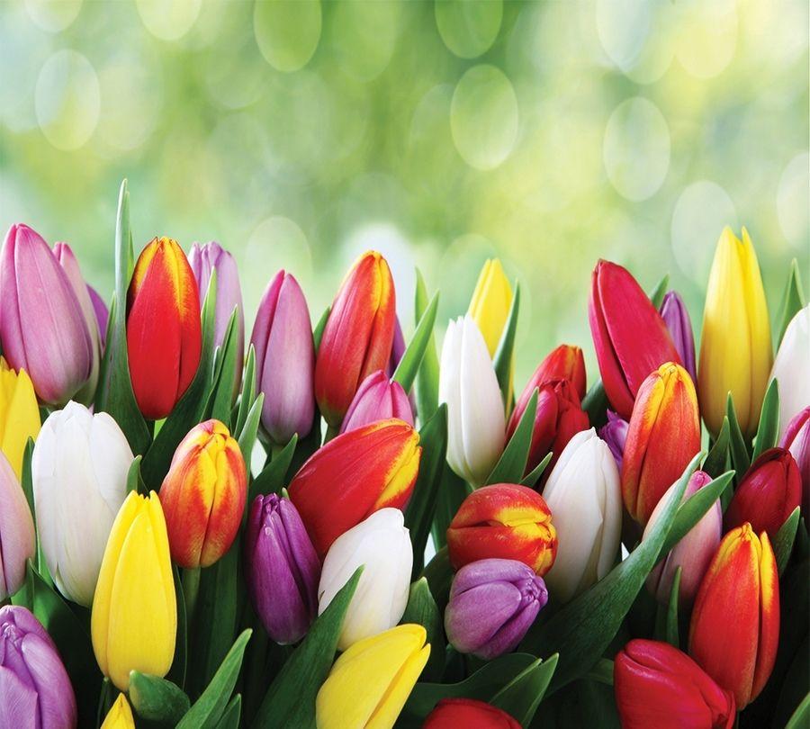 3D Фотообои Фотошторы «Разноцветные тюльпаны»