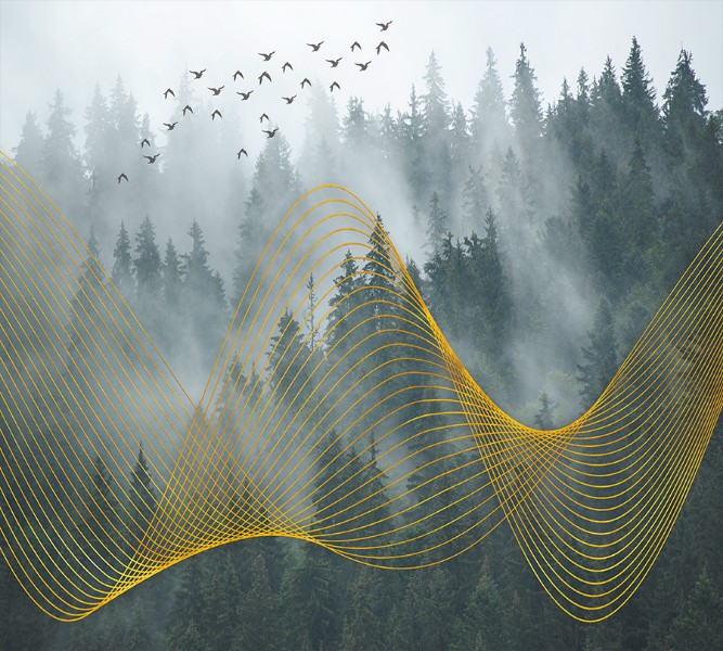 Фотошторы «Туман над лесом» вид 1