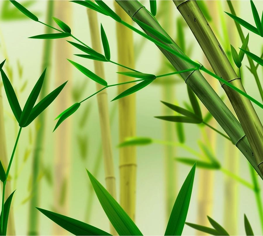 3D Фотообои Фотошторы «Светлый бамбук»