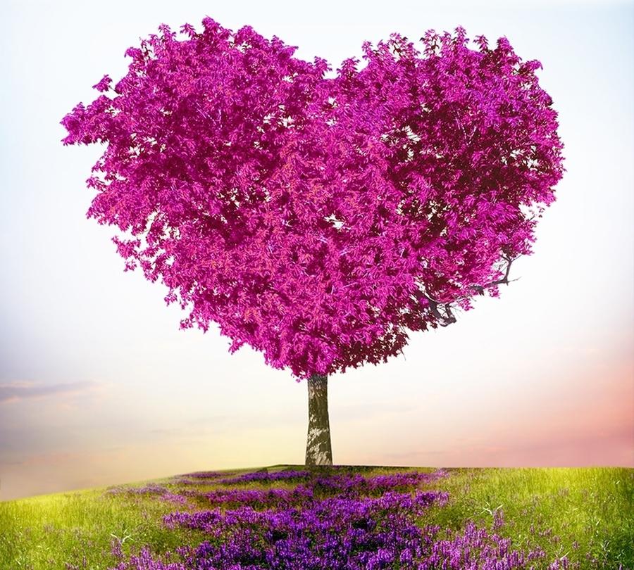 3D Фотообои Фотошторы «Дерево - большое сердце»