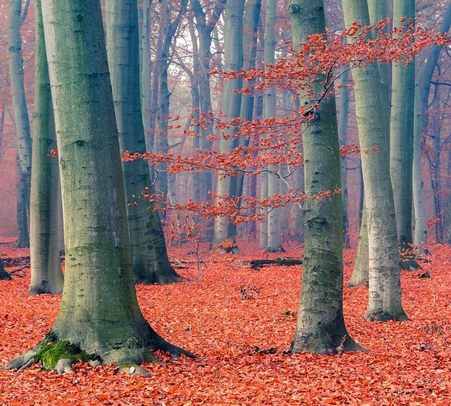 3D Фотообои Фотошторы «Деревья в осеннем лесу»