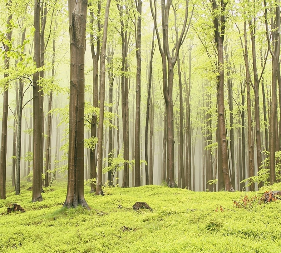 3D Фотообои Фотошторы «Зеленый лес»