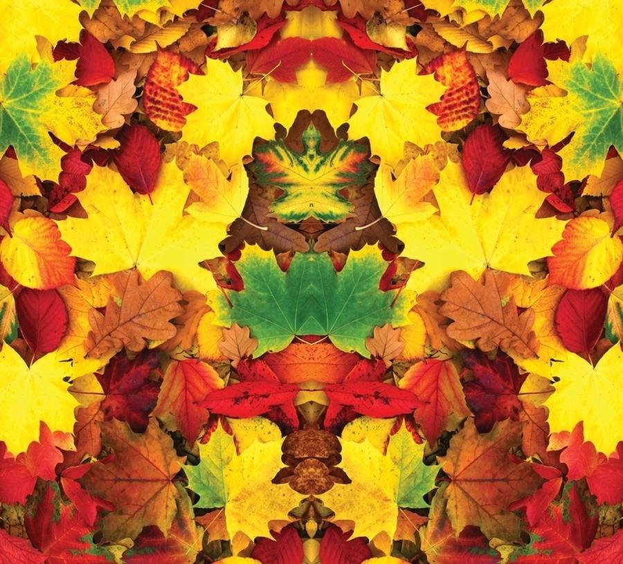 3D Фотообои Фотошторы «Разноцветная листва»