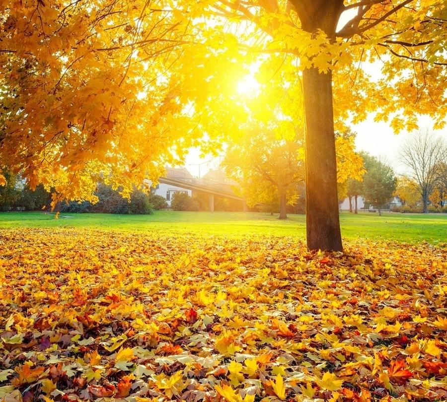 Фотошторы «Осенний парк» вид 1