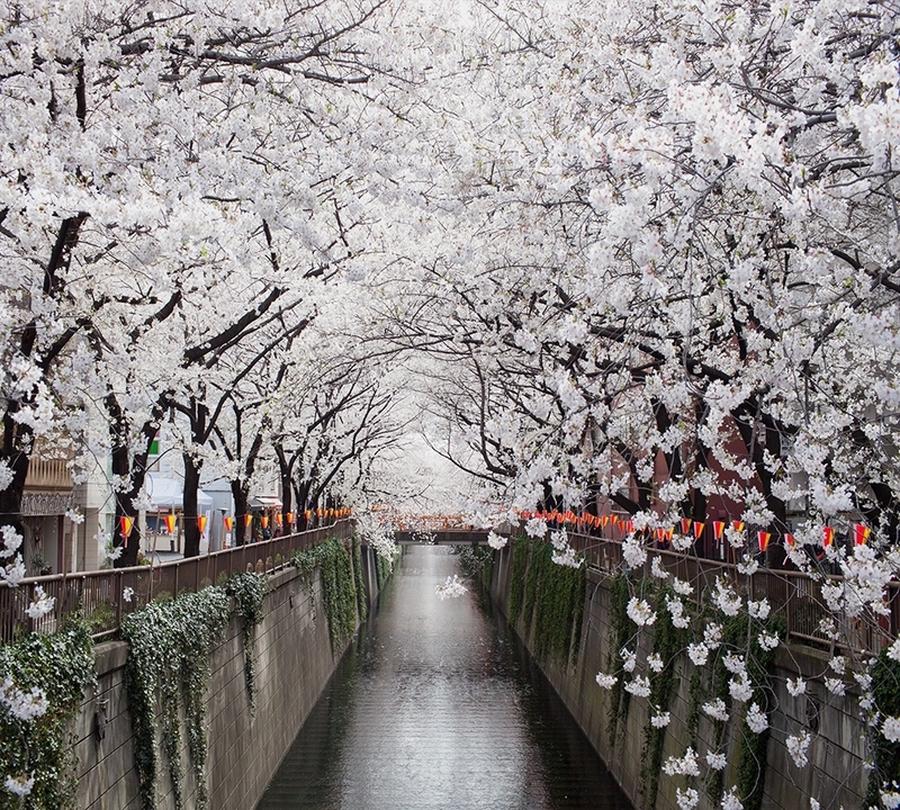 Фотошторы «Сакура у канала» вид 1
