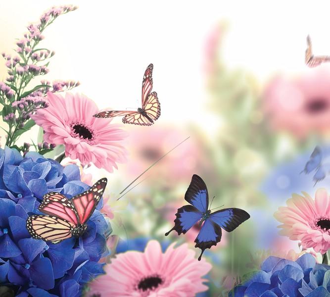 3D Фотообои Фотошторы «Бабочки над герберами»