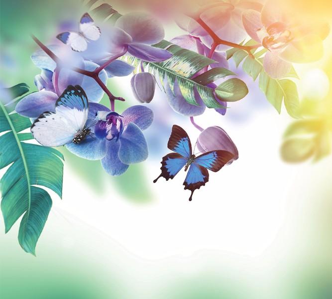 3D Фотообои Фотошторы «Бабочки под орхидеей»