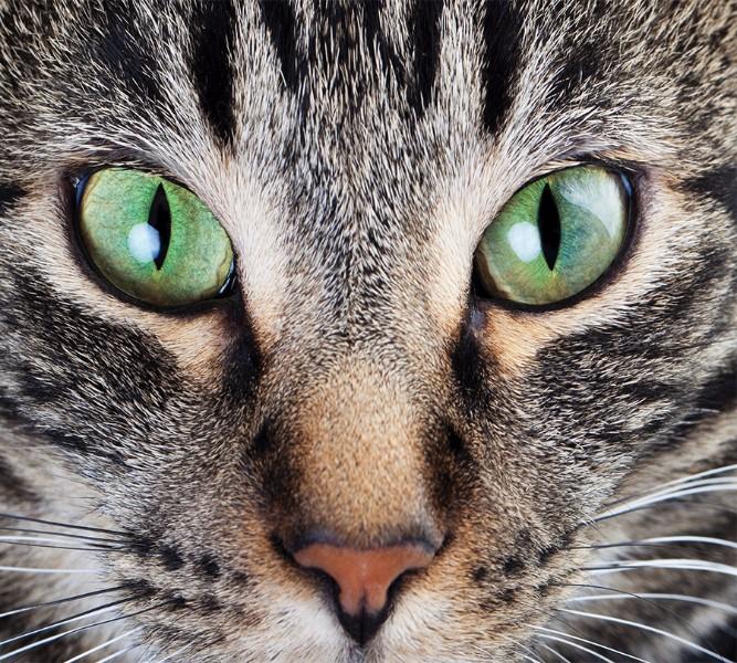 3D Фотообои Фотошторы «Кошачий взгляд»