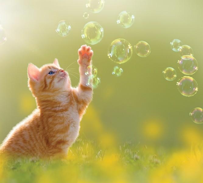 3D Фотообои Фотошторы «Рыжий кот с мыльными пузырями»