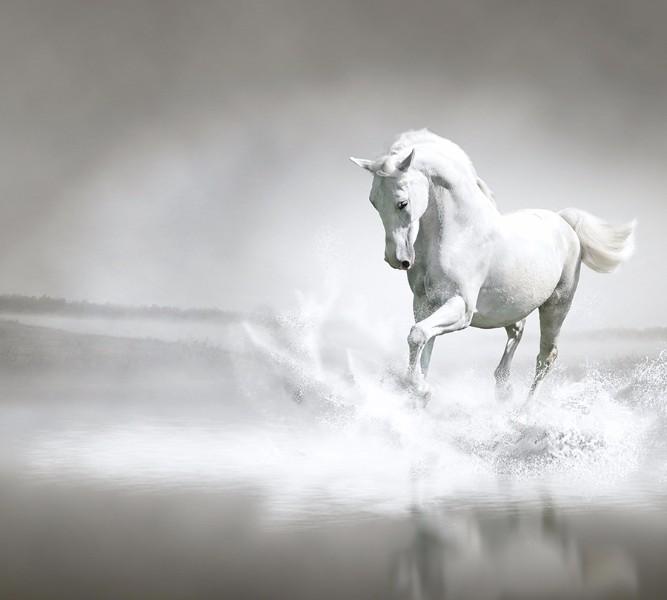 3D Фотообои Фотошторы «Белый конь бегущий по воде»