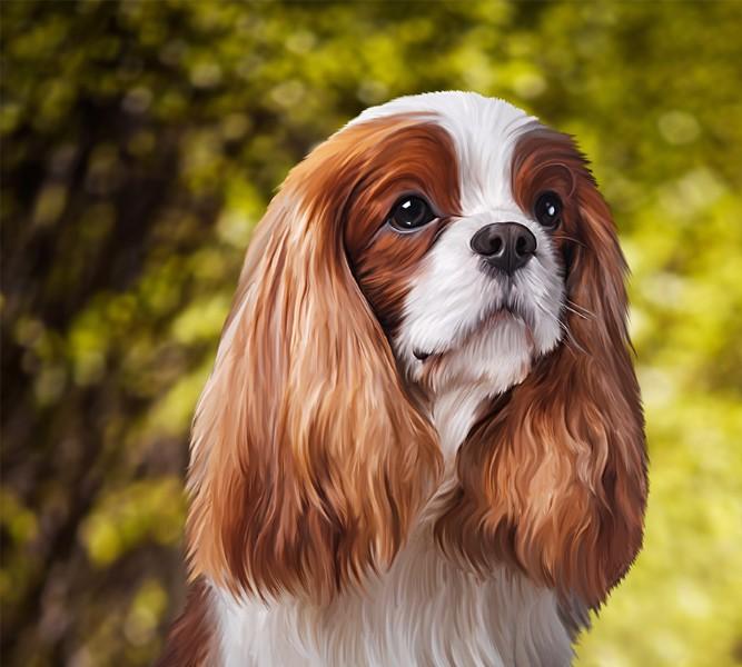 3D Фотообои Фотошторы «Длинноухая собачка»