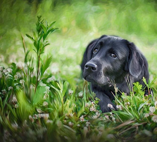 3D Фотообои Фотошторы «Собачка в траве»