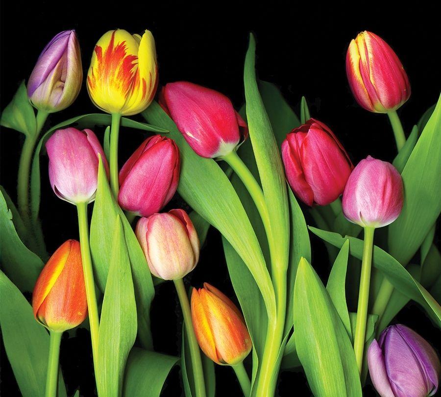 """3D Тюль """"Тюльпаны на темном фоне"""" вид 2"""