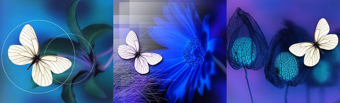 Модульная картина «Белая бабочка с синим цветком»