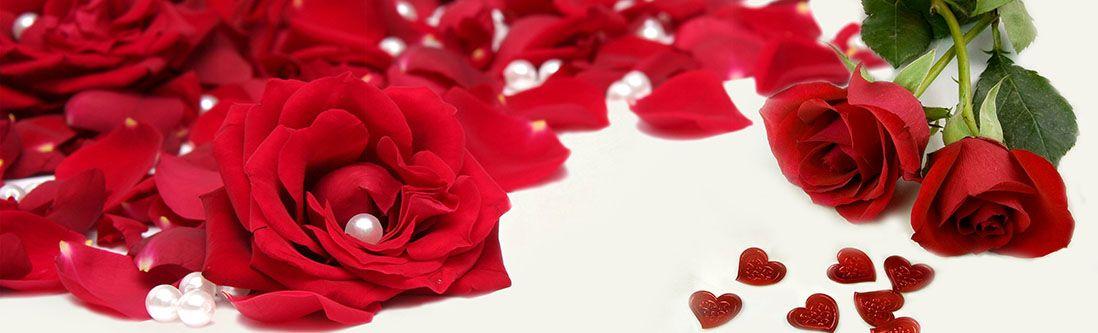 Модульная картина «Красная роза с лепестками и жемчугом»