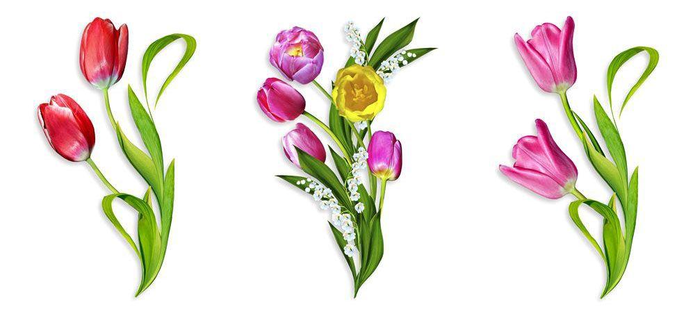 Модульная картина «Тюльпаны на белом фоне»