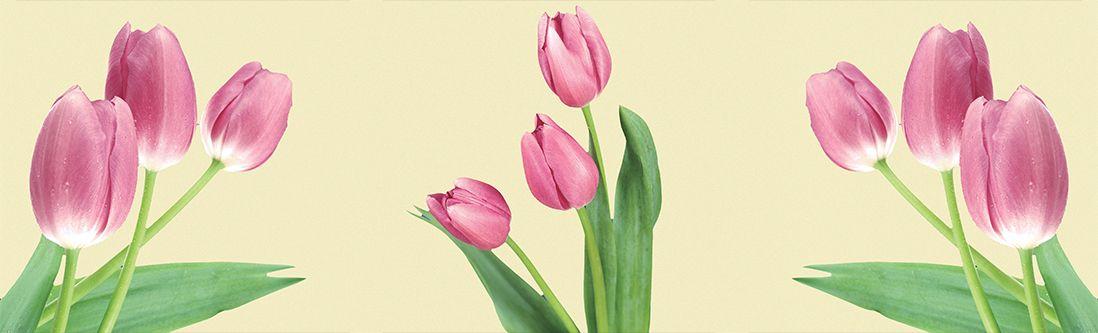 Модульная картина «Светло розовые тюльпаны»