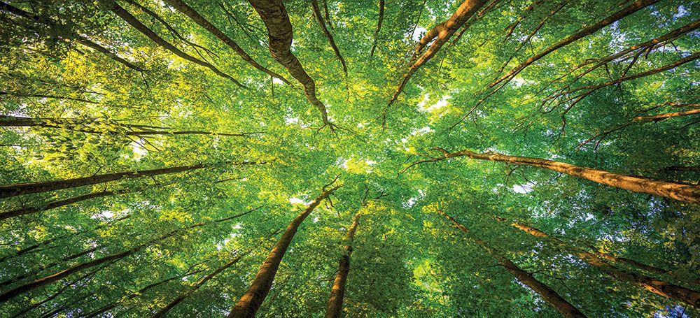 Модульная картина «Зеленые кроны»