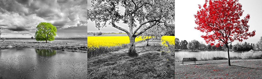 Модульная картина «Одинокие деревья с цветовым акцентом»