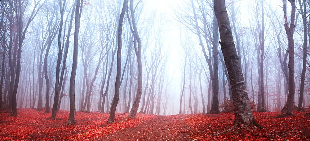 Модульная картина «Красный лес в тумане»