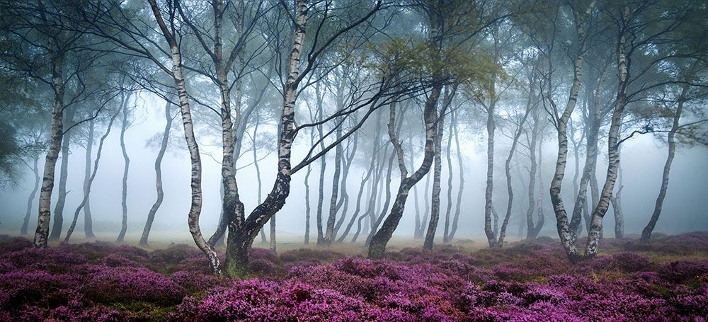 Модульная картина «Деревья в тумане»