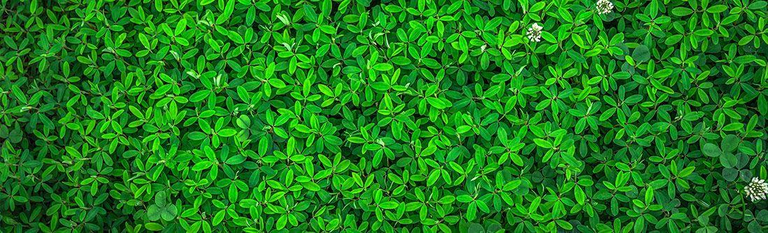 Модульная картина «Зеленые листья»
