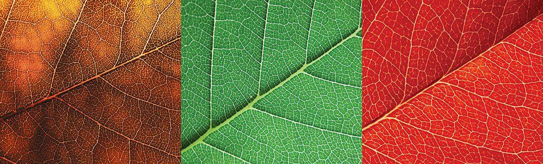 Модульная картина «Листья макро»