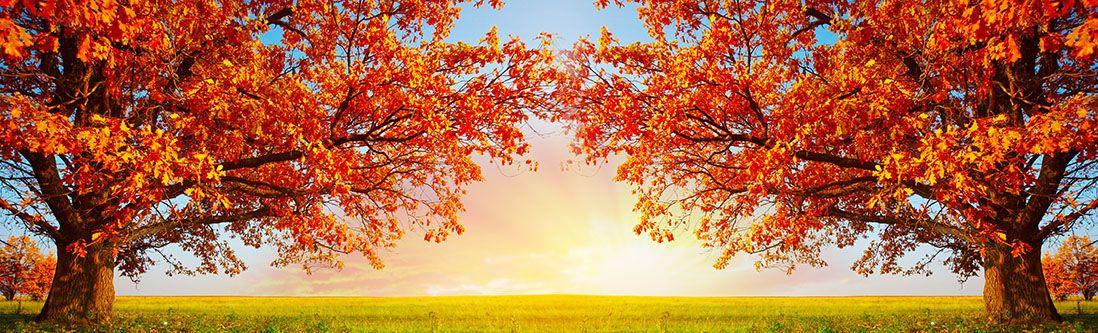 Модульная картина «Осенняя аллея»