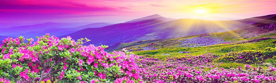 Модульная картина «Цветущие поля у холмов»