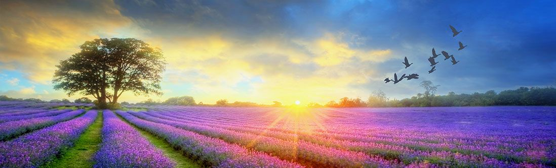 Модульная картина «Утренний восход на цветущем лугу»