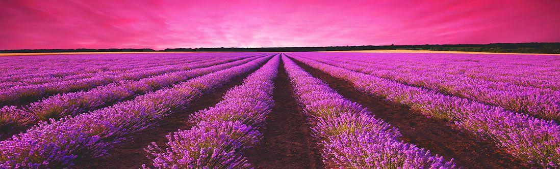 Модульная картина «Сиреневые поля полевых цветов»