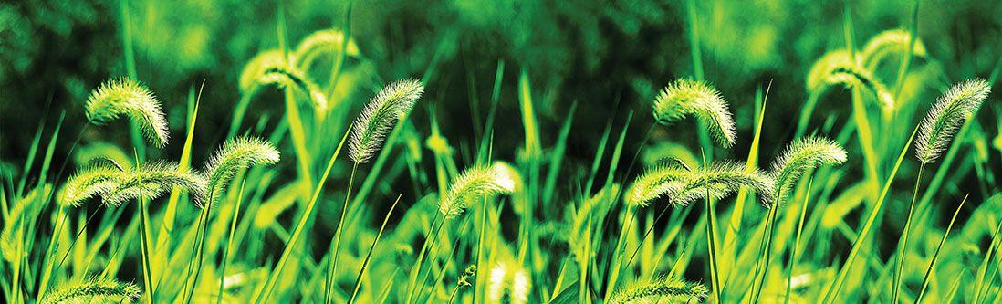 Модульная картина «Зеленые колосья»