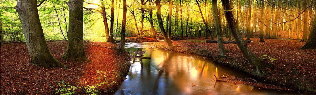 Модульная картина «Река в красочном лесу»