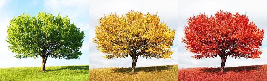 Модульная картина «Зеленое желтое и красное дерево»