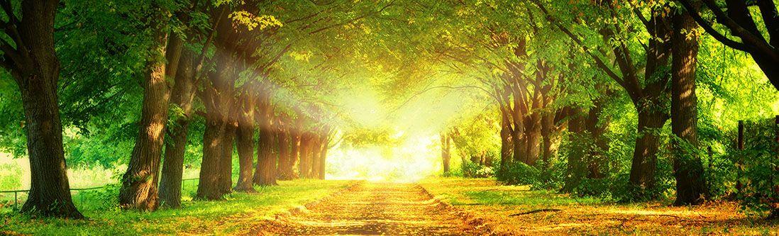 Модульная картина «Аллея в лучах солнца ранней осенью»