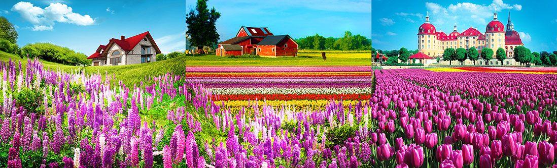 Модульная картина «Поместья в цветочных полях»