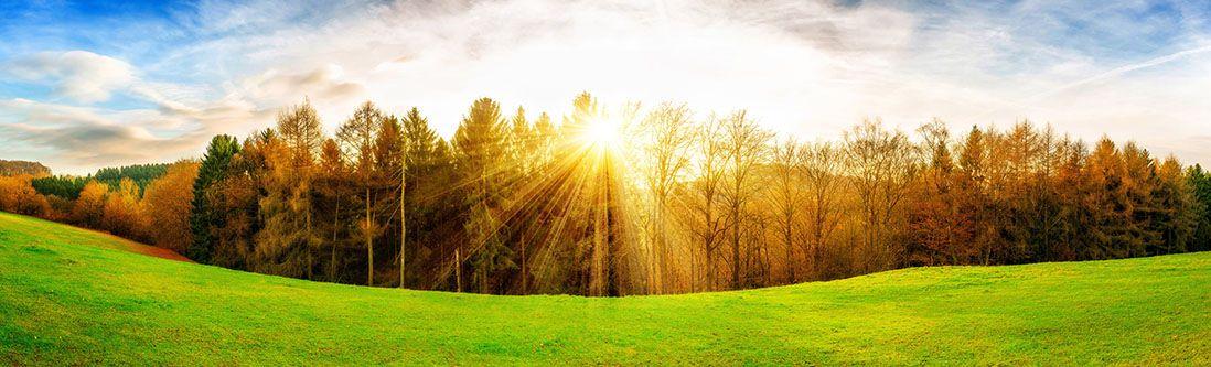 Модульная картина «Лес на закате»